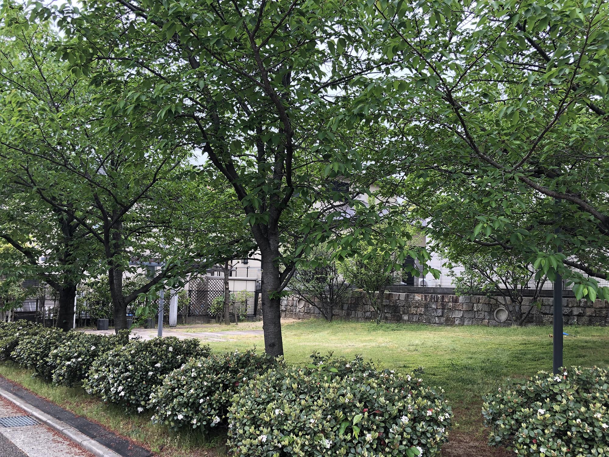 若宮8番地広場