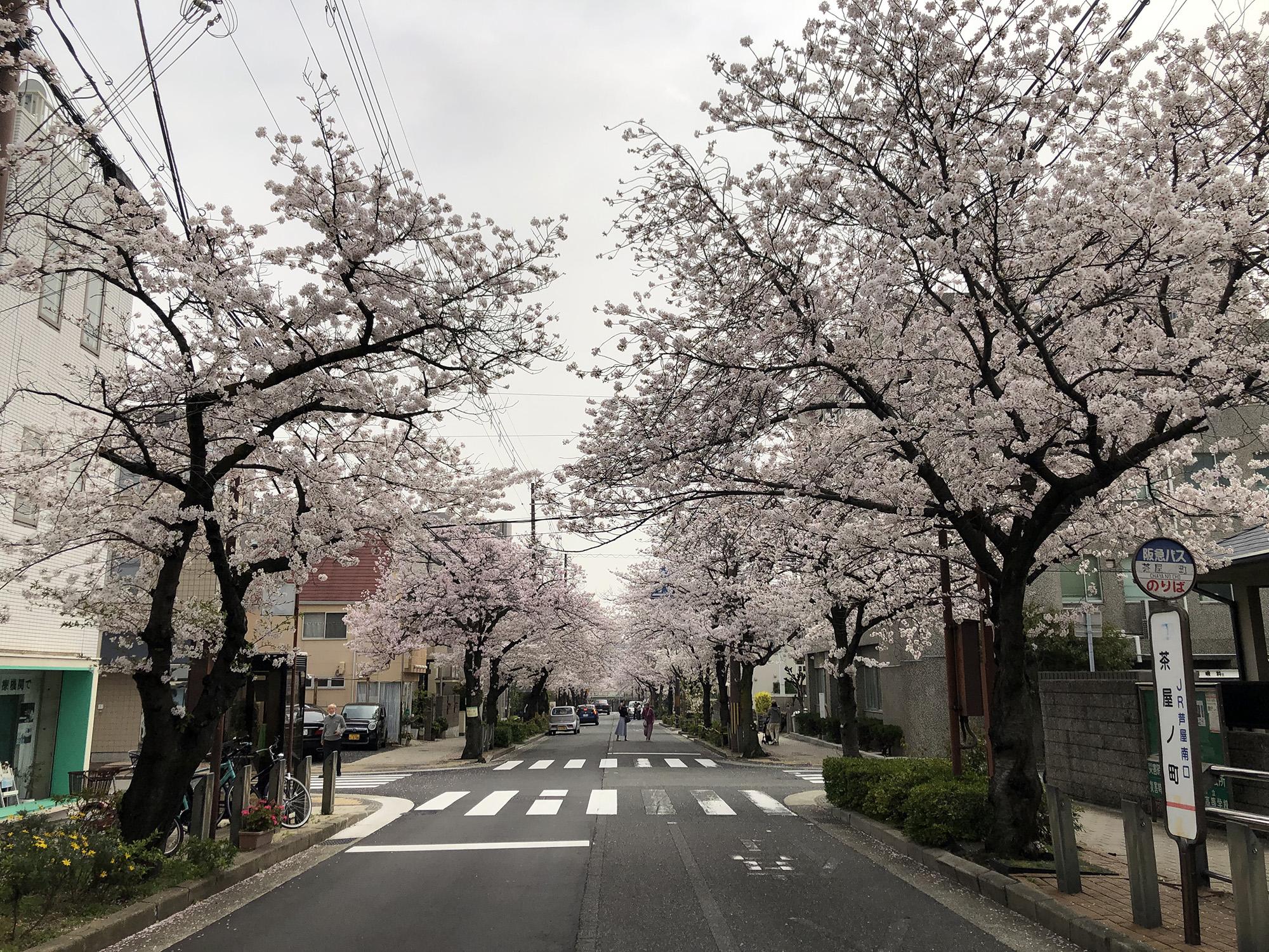 2021年4月1日~5月31日 春のあしや写真コンクール開催